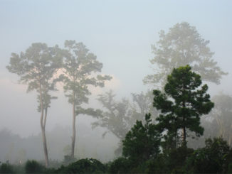 Morning mists - Florida, by B K, via Flickr.com under Creative Commons 2.0 license